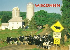 Herd Heads Out To Pasture (mrsris) Tags: usa wisconsin cows dairyfarm