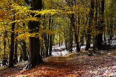 First snow (Gregor  Samsa) Tags: autumn light fall leaves forest czech path walk colorfull illumination czechrepublic colourful leafs bohemia ceskarepublika moravia esko eskrepublika teletin teletn