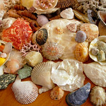 "A Collection of Shells <a style=""margin-left:10px; font-size:0.8em;"" href=""http://www.flickr.com/photos/89335711@N00/8597695637/"" target=""_blank"">@flickr</a>"