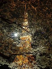 P1040196 (kaleidrium) Tags: travel light japan night tokyo sightseeing cherryblossom tokyotower