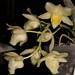 Glowesia Jumbo York – Renate Schmidt