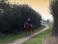 horse riding (mujepa) Tags: horse trek cheval ride path riding cavalier rider lorraine sentier randonne quitation mygearandme pournoylachtive