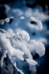 Wildenloh Winter 2013-0032.jpg (stephan119) Tags: winter 2013 wildenloh