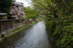 Gion, Kyoto /  (Kaoru Honda) Tags: city nature japan bar cherry landscape restaurant town spring alley nikon kyoto traditional alleyway tavern     gion    shirakawa            tatsumibashi d7000