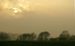 Day # 101. Evening mist (Harleycy3) Tags: trees mist clouds landscape subtlecolours littleburstead countyofessex