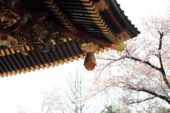 Japanese religious architecture / () (TANAKA Juuyoh ()) Tags: architecture cherry religious temple japanese design high exterior blossom hires  resolution sakura 5d hi saitama res markii     kumagaya               menumashoudenzan