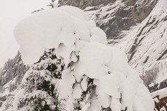 Snowy Switzerland (webeagle12) Tags: mountain snow mountains alps switzerland europe swiss valley lauterbrunnen berne eiger bernese jungfrau monch berneseoberland oberland susse nikond90 1685mm