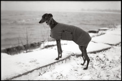 Kino in Chicago, IL (moominsean) Tags: winter greyhound snow chicago belair illinois lomography kino kodak tmax lakemichigan 100 58mm fosterbeach peacoat cityslicker thelittledoglaughed