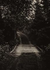Road to? (Pilleluringen) Tags: wood old bridge trees blackandwhite bw nature monochrome landscape sweden outdoor surreal serene bnw hrnsand hgakusten highcoast