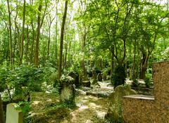 16-Highgate Cemetery East - Graves 3-1047 (md2399photos) Tags: 11aug16 dickwhittingtonscat highgatecemetery karlmarx london notesonblindness stpancras themeetingplacebypaulday