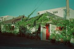 16'SummerISHIGAKI#1 (ondaketaniyan) Tags: leica m6 film street voigtlander nokton classic 35mm adox colorimplosion