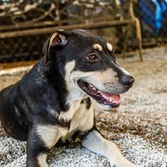 Billy_Jean27Aug1600074.jpg (fredstrobel) Tags: dogs pawsatanta atlanta usa animals ga pets places pawsdogs decatur georgia unitedstates us