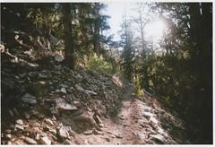 Methuselah Trail (kevinmarquezphoto) Tags: vivitar ultra wide slim 35mm toy inyo national forest nature hiking schulman grove methuselah bristlecone pine 395