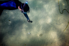 _DSC1023 (andrewlorenzlong) Tags: california laguna beach lagunabeach pacific ocean pacificocean snorkel snorkeling stingray sting ray rays stingrays leopard leopardray leopardrays thornback thornbackray sam