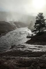 The Firehole River (wyojones) Tags: wyoming yellowstonenationalpark uppergeyserbasin oldfaithfulvillage fireholeriver steam sunrise morning river water cascadegeyser runoffchannels steamy wyojones np