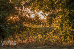 Evening Light at Groby (Sue_Hutton) Tags: august2016 grobypool leicester evening goldenlight magicallight summer