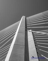 Tilikum Crossing Towers in Black & White (AvgeekJoe) Tags: bw blackwhite blackandwhite bridgeofthepeople d5300 dslr nikon nikond5300 oregon portland tilikumcrossing tilikumcrossingbridgeofthepeople willametteriver bridge cablestayedbridge transitbridge