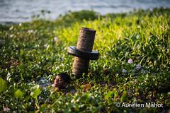 inde_1102163933.jpg (aurelien.mahot) Tags: kumarakom backwaters inde indien asiatique asie indedusud kerala