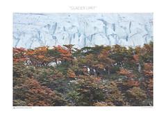 Glacier Limit (www.sicilylandscape.com) Tags: torresdelpaine patagonia autumn snow glacier