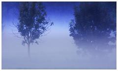 Morning fog (na_photographs) Tags: nebel dunst summer mist blue trees