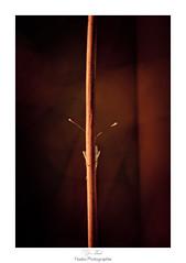 Cache cache (Naska Photographie) Tags: naska photographie photo photographe paysage proxy proxyphoto papillon macro macrophotographie macrophoto extrieur insectes butterfly butterflie nature sauvage soleil sun bokeh color couleur