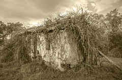 Creepy House in Sepia (davidherraezcalzada) Tags: creepy scary dark background horror grunge old window dirty light house vintage abandoned room spooky ghost fear evil halloween scenery abstract building broken abandon poster door desolate weathered dangerous dramatic area possessed structure blackandwhite