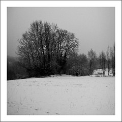 snowy morning (*jos*) Tags: trees winter bw snow bn squared