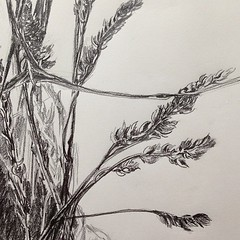 "#grass and #sequoia twigs #botanical arrangement #winter #sketch #sketchbook • <a style=""font-size:0.8em;"" href=""https://www.flickr.com/photos/61640076@N04/8471755116/"" target=""_blank"">View on Flickr</a>"