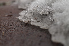 Tiny Glacier (Dan Constien) Tags: brown white snow ice wisconsin canon eos rebel 50mm melting dof glacier sidewalk madison t3 february niftyfifty