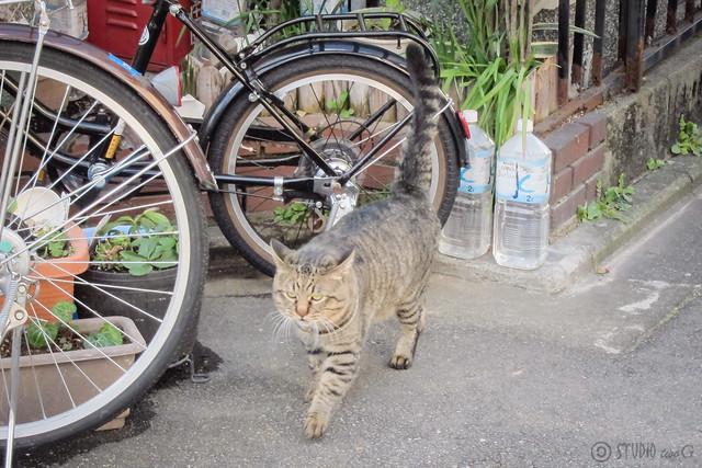 Today's Cat@2013-02-17