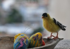 Needle Felted Wool Bird-American Goldfinch -Soft Sculpture-needle felt by Daria Lvovsky (daria.lvovsky) Tags: wool yellow felted soft goldfinch waldorf felt needle fiberart realistic artistbears birdamerican sculptureneedle