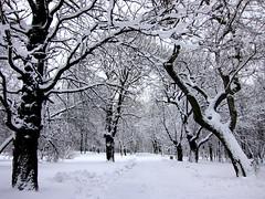 (ela_s) Tags: park zima lotnikow canons90
