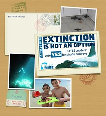 Vincenzo Marotta (Project AWARE Foundation) Tags: padi cites projectaware sharkconservation cop16 cites4sharks
