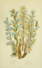 Anglų lietuvių žodynas. Žodis broom sedge reiškia šluota viksvų lietuviškai.