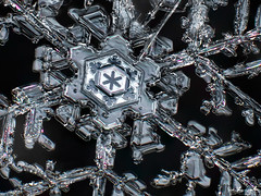 Majestic Ice (Don Komarechka) Tags: snowflake winter snow cold macro ice beautiful crystal geometry fractal donkom