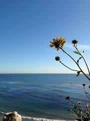 Brenda's grad beach day (Still_ill823) Tags: ocean flower beach insect minimalism simple iphone elmatadorstatebeach photobomb uploaded:by=flickrmobile flickriosapp:filter=nofilter