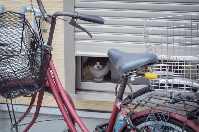 Today's Cat@2013-03-08