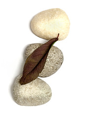 371_7063_10-03-13 (homewurks) Tags: old john photography leaf stones dry pebbles pebble hopkins homewurks