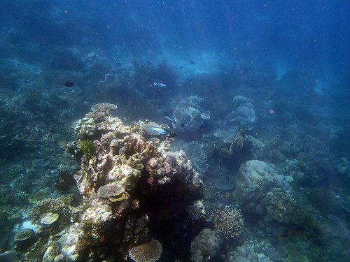 Coral reefs around Atauro Island, Timor-Leste. Photo by S. Suri, 2013.