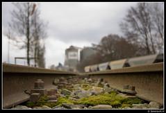 Emplacement Coenhaven (Spoorpunt.nl) Tags: amsterdam mos europe foto minerals 17 spoor westhaven emplacement maart cargill sfeer coenhavenweg graan bielzen 2013 wagens coenhaven spoorstaven graanwagens