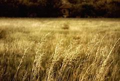 Other World (Silviya Valcheva) Tags: trees summer sun house holiday hot green home nature field grass landscape outside photography scenery mood village image happiness silence rest magical plain veld herbage aesthetic