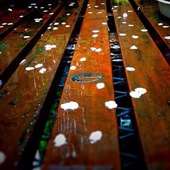 雨に濡れかろうじて生命感を保つ地に落ちた花弁。春の嵐、いや華の嵐。高木美保&渡辺裕之を思い出さずにはいられないトーキン・アバウト・マイジェネレーション。