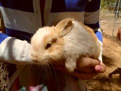 SAM_2500 (TheBosque) Tags: bunnies farm meat rabbits unconference ideasfestival temporaryautonomouszone ideafestival cumbreyah raisingrabbits cy2013