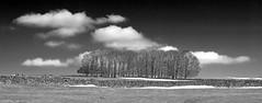 Trees (l4ts) Tags: trees snow landscape blackwhite derbyshire peakdistrict powerlines cloudscape drystonewalls springtime whitepeak brushfield minoltaamount britnatparks