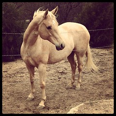 beautiful pony :)