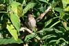 Birds In My Front Yard. (Eugene1959) Tags: myfrontyard experimentalshots experimentations nikond3100 birdsinmyfrontyard