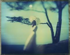 (ludwigwest) Tags: graflex speedgraphic polaroid59 aeroektar myriiamm