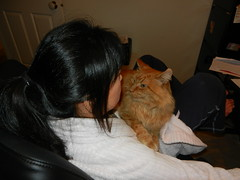 DSCN0524 perching (drayy) Tags: orange cat ginger soft fluffy mainecoon neko ggg oreengeness thebiggestgroupwithonlycats