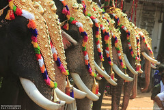 MG_3558 (PRATHAPSTOCKIMAGE) Tags: india elephant festival canon religion decoration kerala trissur pooram nettipattom eos60d