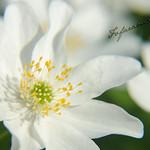 Frühling ? Spätling thumbnail